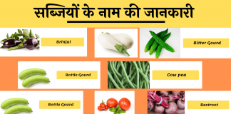 Vegetable Name List Hindi English image