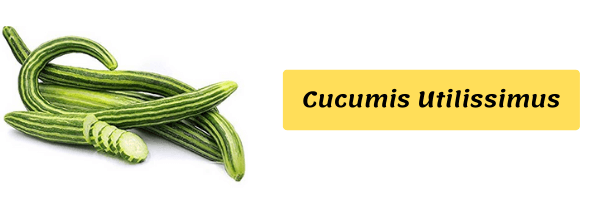 Vegetable Name with image cucumis utilissimus