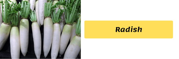 Vegetable Name with image radish