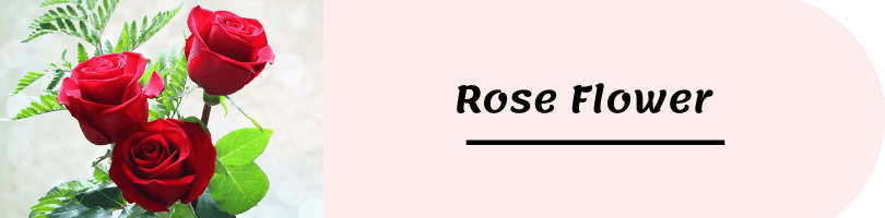 flower name picture rose flower