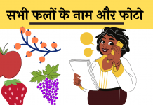 Fruits Name list hindi me