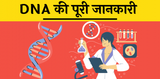 Full Form DNA Kya hai sanrachna hindi